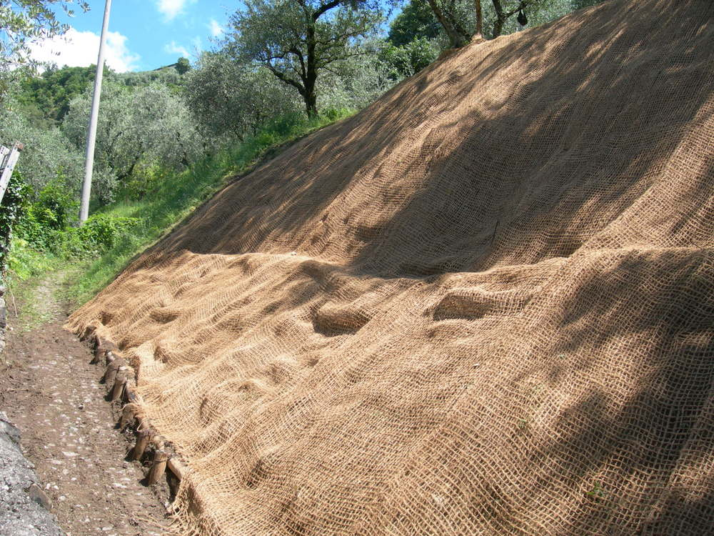 Montano For Garden (2)